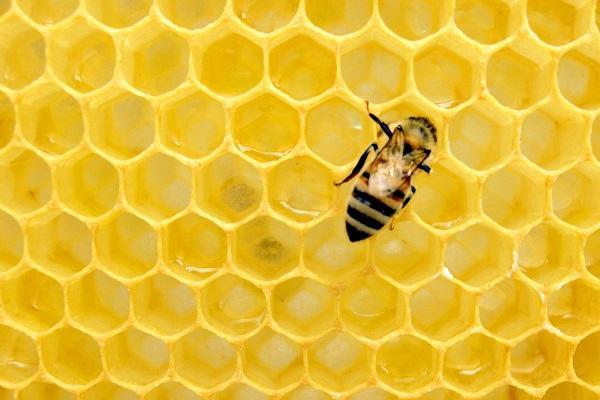 Ngủ nằm mơ thấy con ong đánh số mấy?