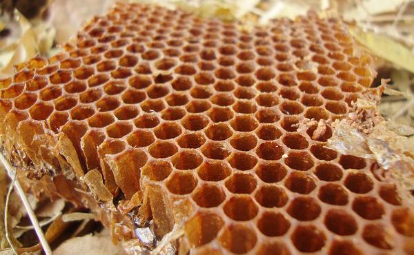 Giải mã giấc mơ thấy tổ ong báo điềm lành hay dữ?