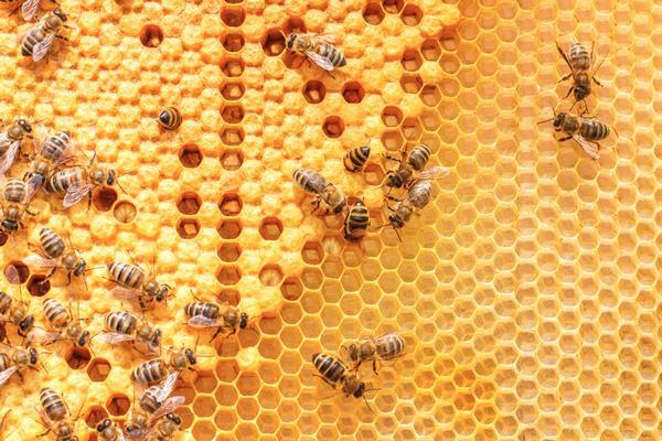 Nằm Mơ Thấy Ong Đánh Con Gì | Giải Mã Giấc Mơ Thấy Ong Đốt, Tổ Ong, Mật Ong